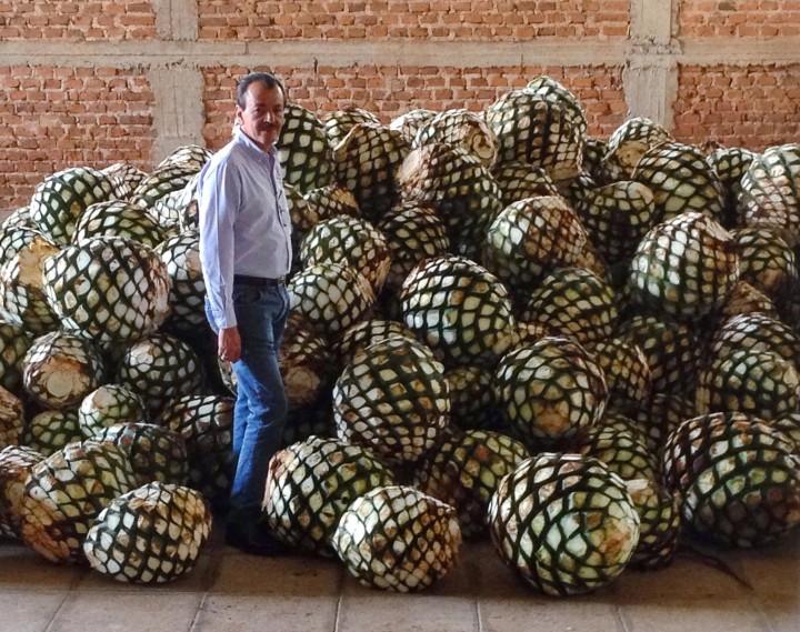 thu-hoạch- trái-cây-Thùa-agave